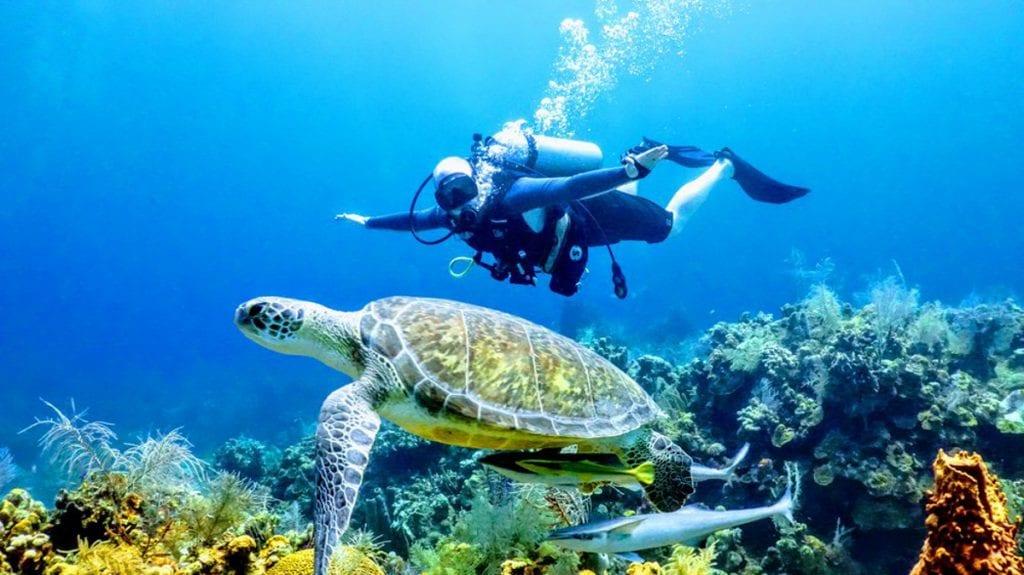 Chris scuba diving behind a large sea turtle
