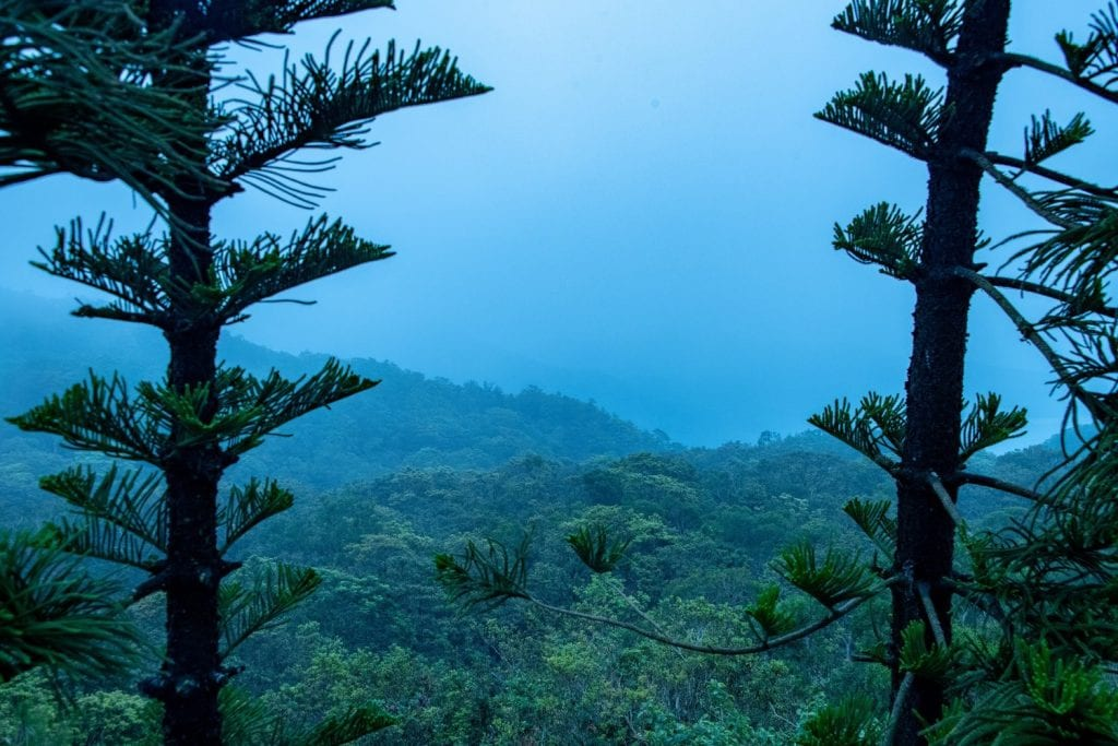 A picture in between two trees of a green mountain view and hazy blue sky