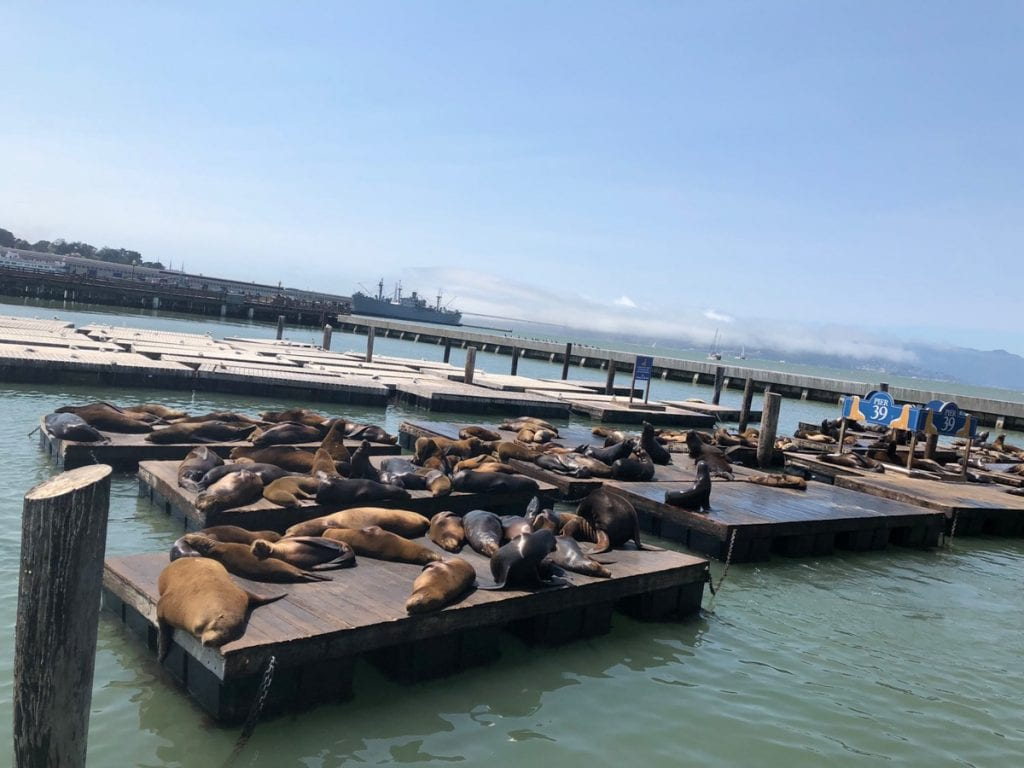 Docks covered by seals